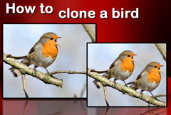 How to clone a bird with Image Dream